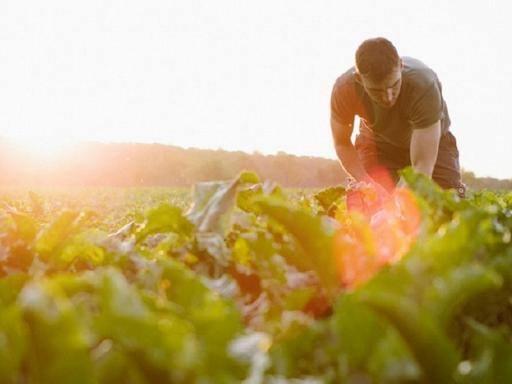 Afragola, ordinanza del Comune: vietato lavorare nei campi nelle ore calde della giornata